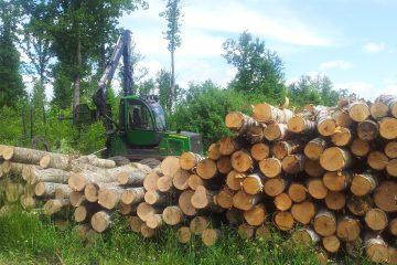 Miško darbai
