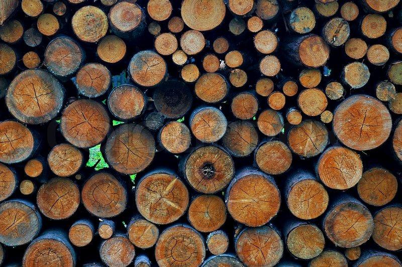 Apvaliosios medienos bei nenukirsto miško matavimo ir tūrio nustatymo taisyklės